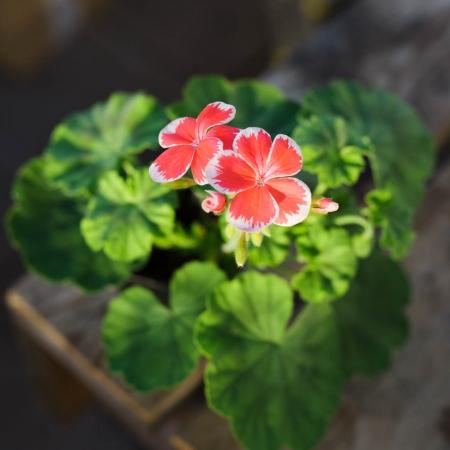Dagnys Plantskola - Mr Wren