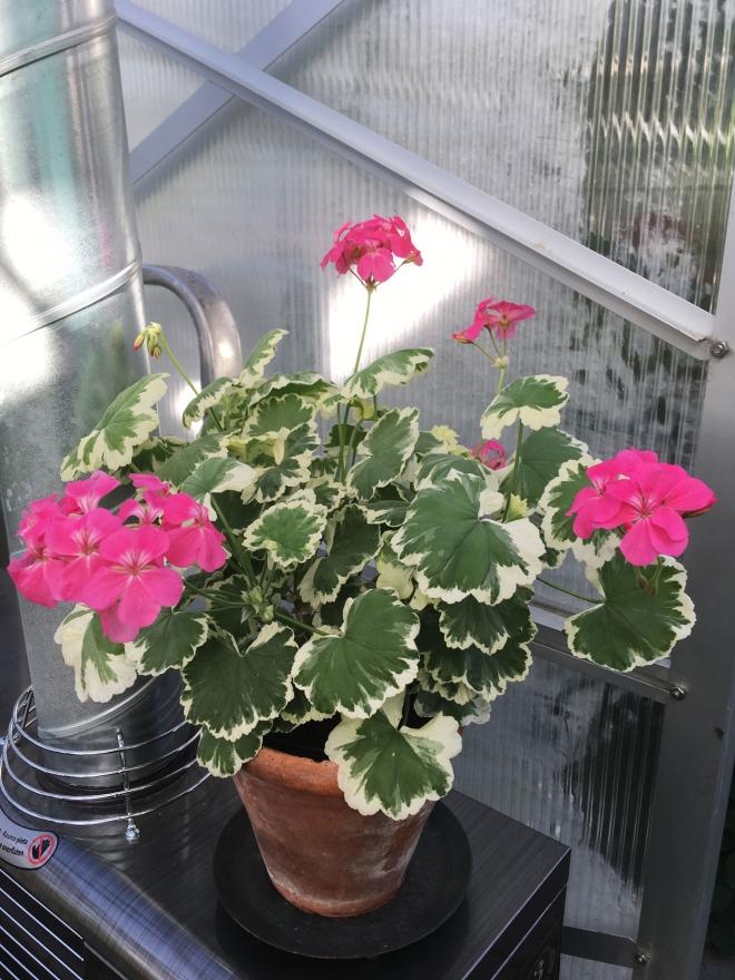 Leamington Dagnys Plantskola