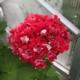 Pink Rambler